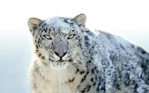 mac os wallpaper. snow leopard mac os x