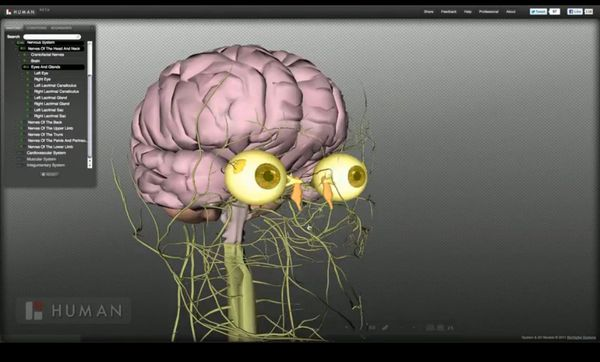 Biodigital Human un atlas 3D de la anatomía humana - Ciencia y ...