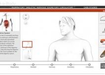 Build a Body cuerpo humano