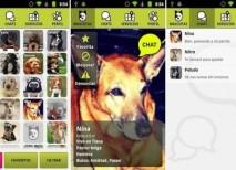 Doggy Talk red social perros
